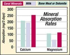 coral calcium absorption