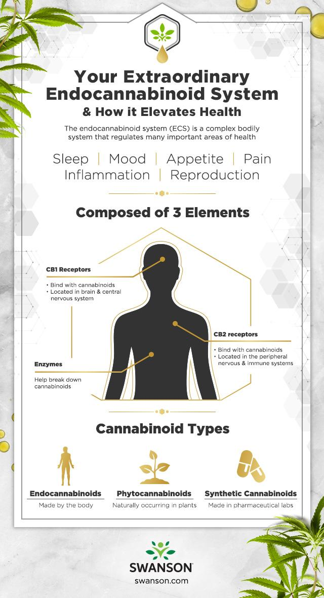 Your Extraordinary Endocannabinoid System Infographic