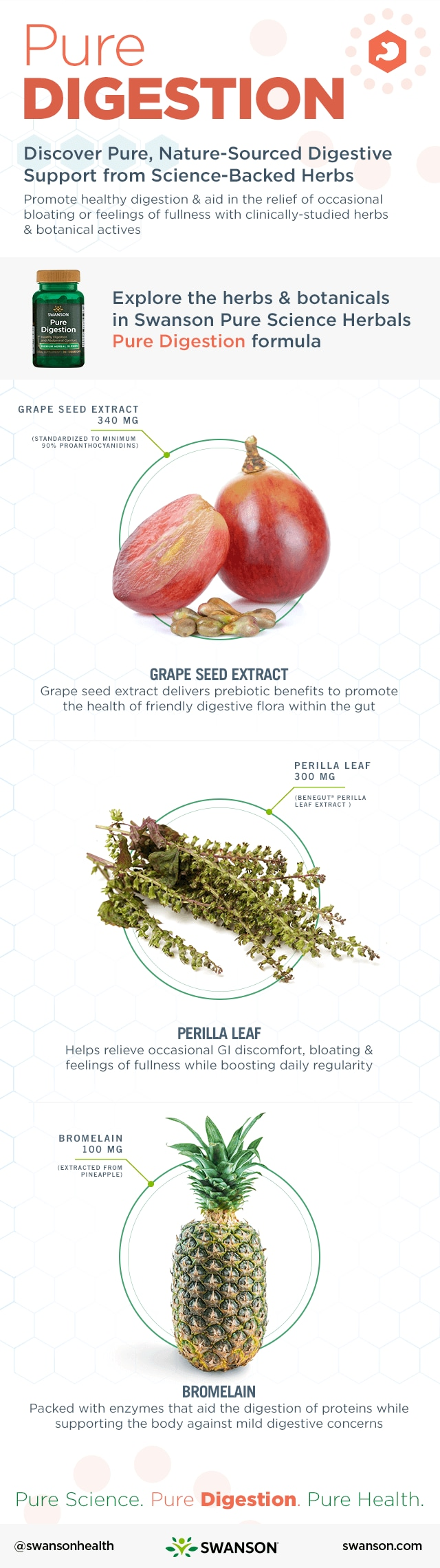 Herbs for Better Digestion Infographic