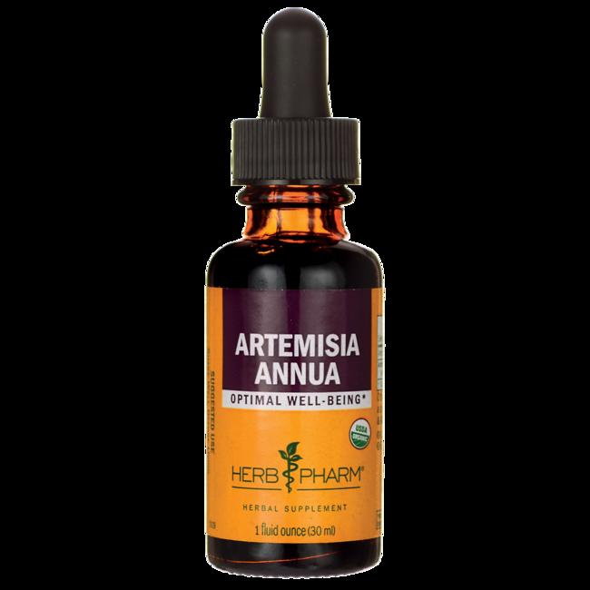 Herb PharmArtemisia Annua